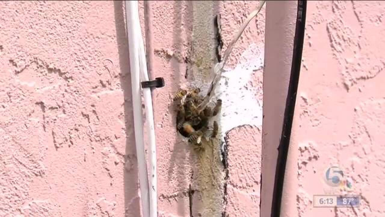 Bees invade couple's Wellington home