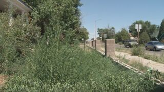Overgrown weeds in Pueblo