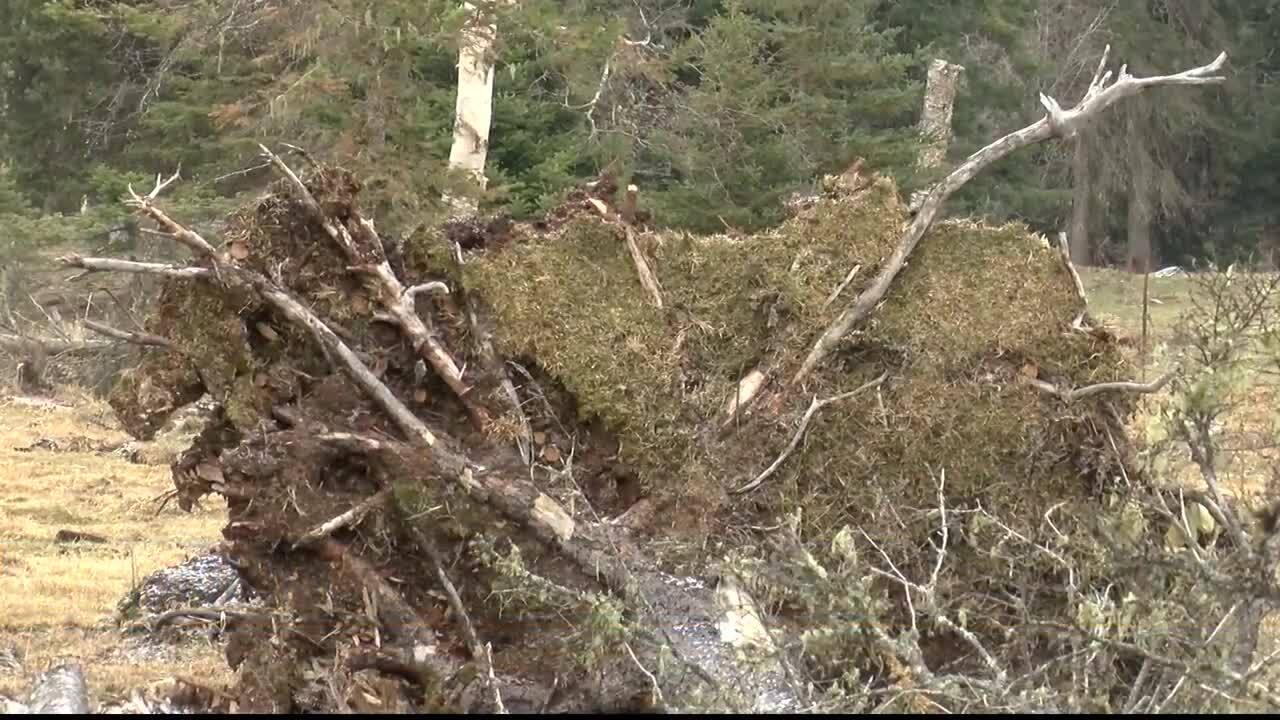 Bigfork residents re-build after wind storm