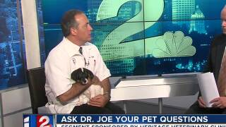 July 5 Dr. Joe Bart the Dog