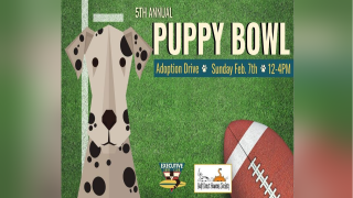 """Fifth annual """"Puppy Bowl"""" will take place Sunday at Executive Surf Club"""
