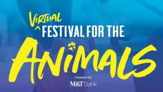 festival for the animals web.jpg