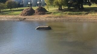 Saab found in Tulsa pond