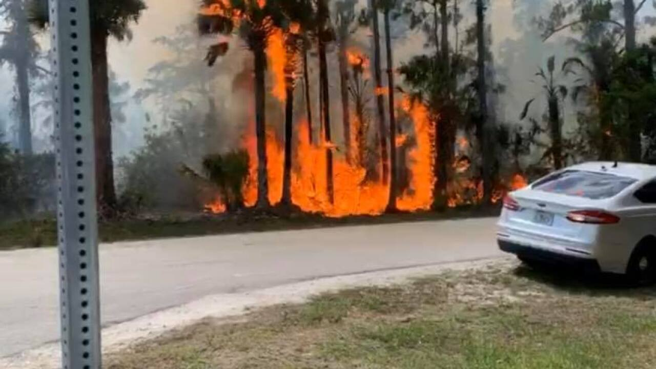 Florida Forestry Services is responding to large wildfire in Collier County