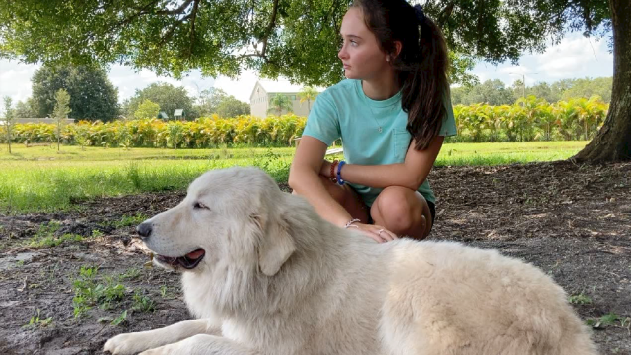 South-West-Florida-Therapy-Animals.png