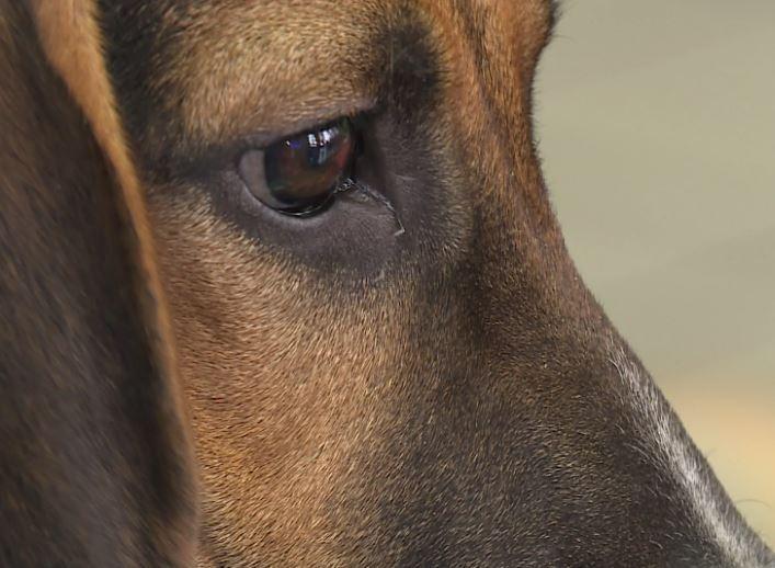 Photos: Dealership teams up with Richmond Animal League for BlackFur-Day