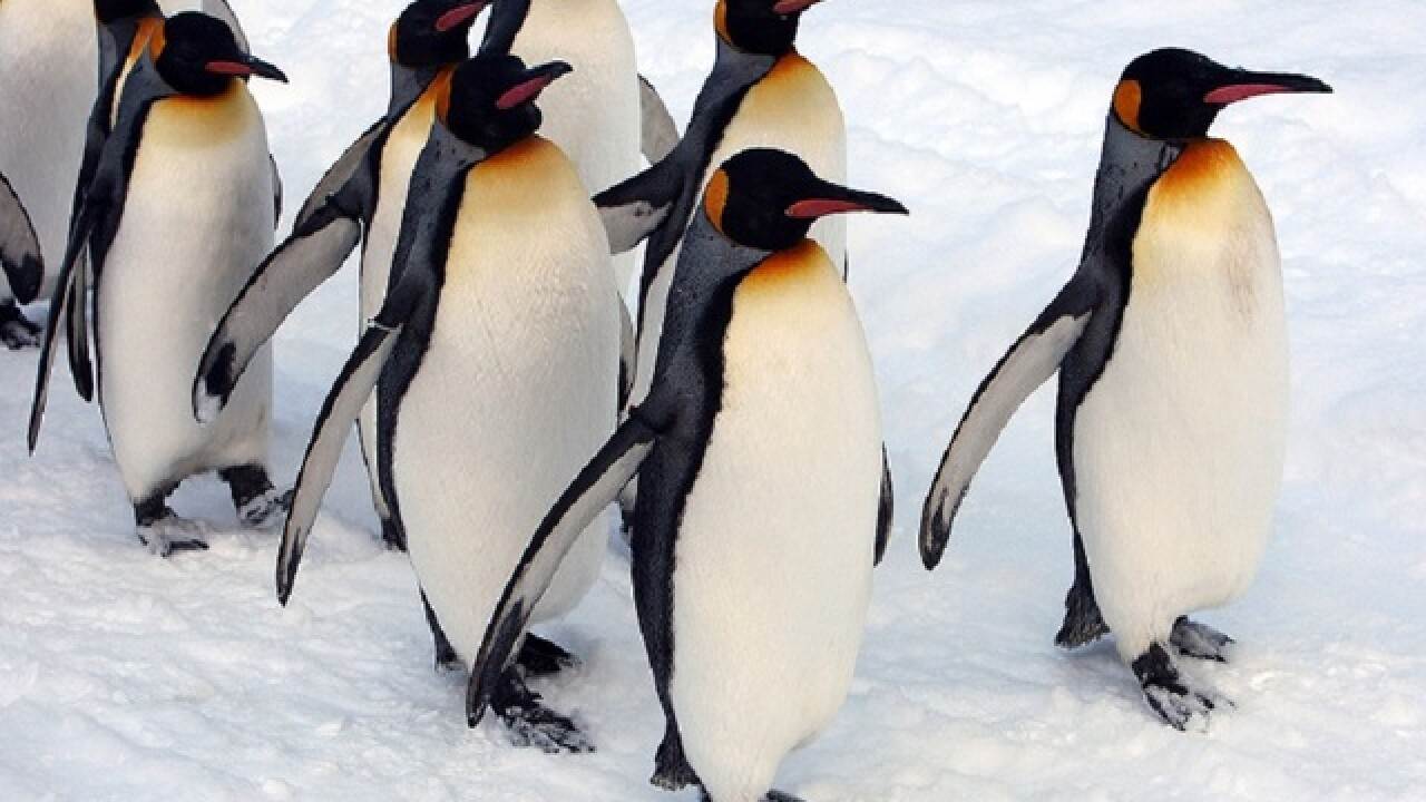 10 facts to get you by on Penguin Awareness Day