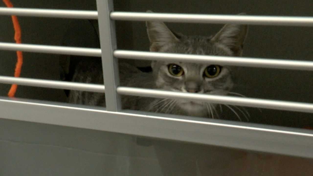 Picture of cat at PACC facility