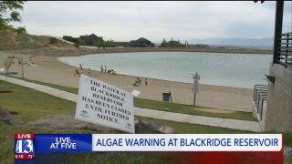 Toxic algal bloom detected at popular Herriman swimmingspot
