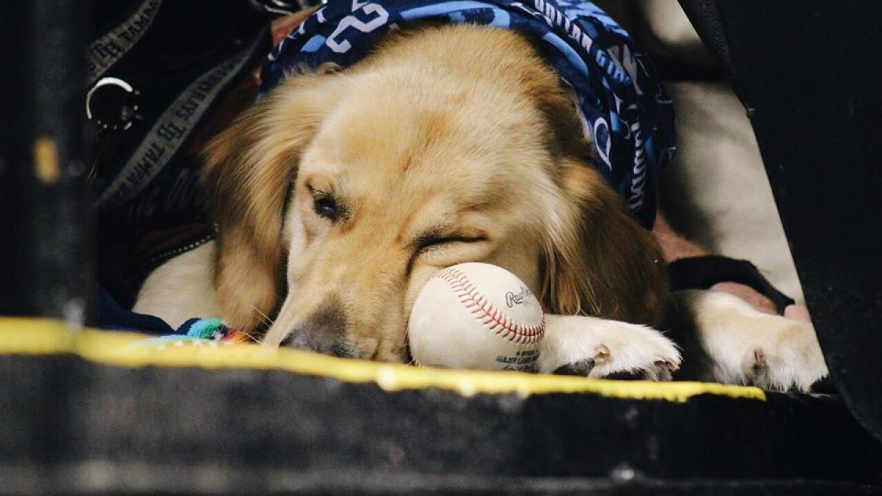 DOG DAY AT THE RAYS.jpg