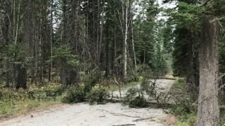 Ferndale Tree Down