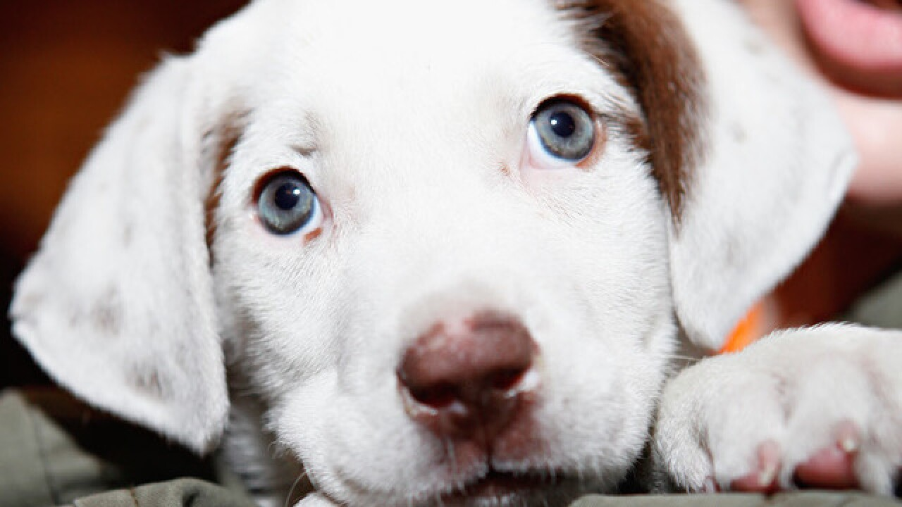 Brewery to give paternity and maternity leave for employees with new puppies