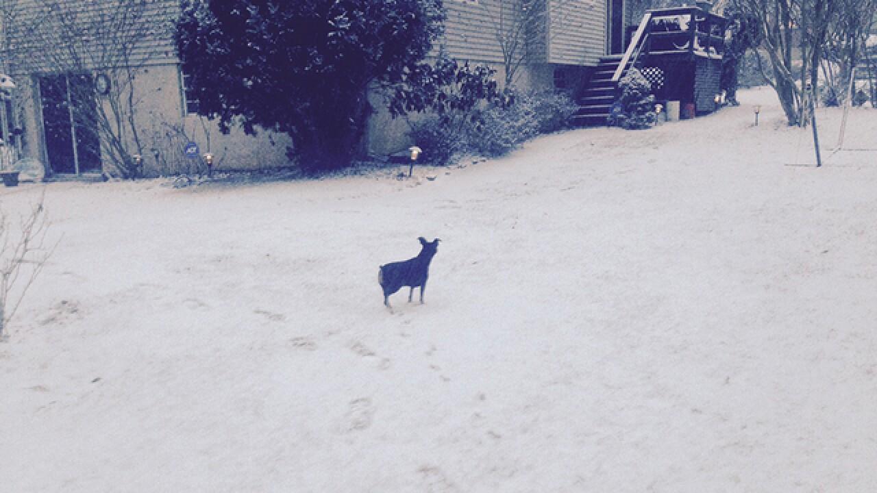 PHOTO: Blizzard 2016 in Baltimore, MD