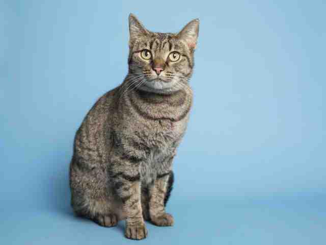 Adoptable pets from Arizona Humane Society, Maricopa County Animal Care (6/20)
