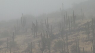 A welcome wet day in the desert