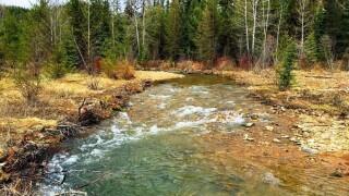 Upper Ninemile Creek