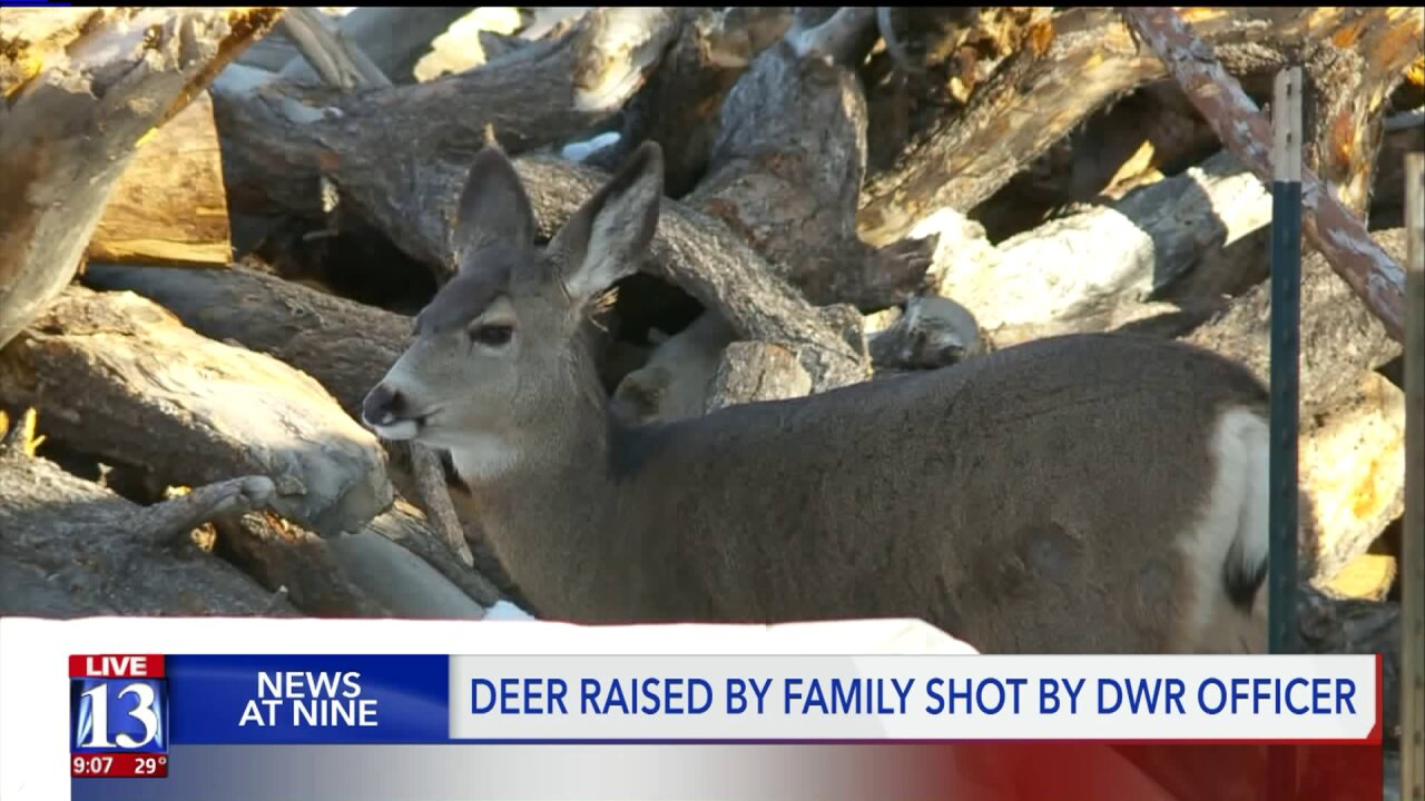 Deer raised by Utah family survives after being shot by DWR officer