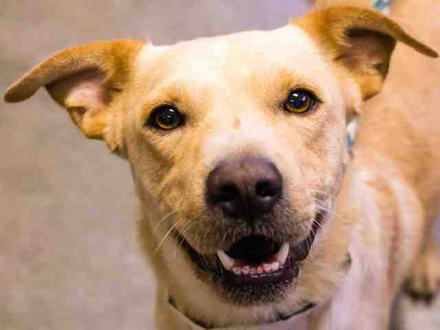 PHOTOS: 25 pets available for adoption in the Valley (9/20)