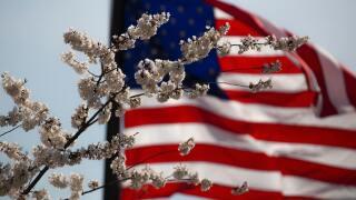 american flag flower generic