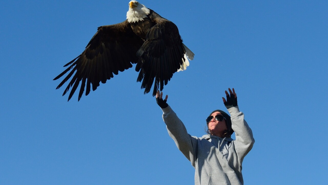 Bald eagle found along Missoula roadside soars again