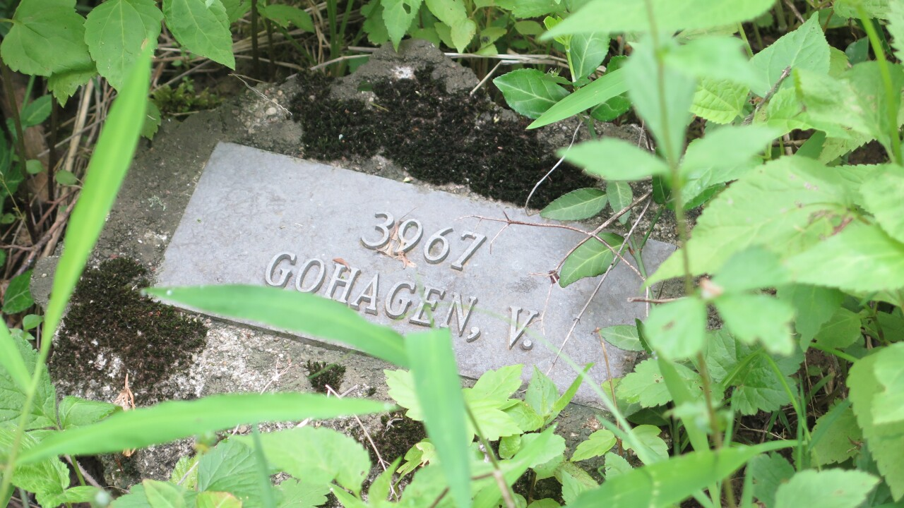 This photo shows one of the hundreds of grave markers obscured by weeds and overgrowth at Cincinnati's Potter's Field cemetery in West Price Hill. The small marker includes the number 3967. The name Gohagen, V. is below the number.