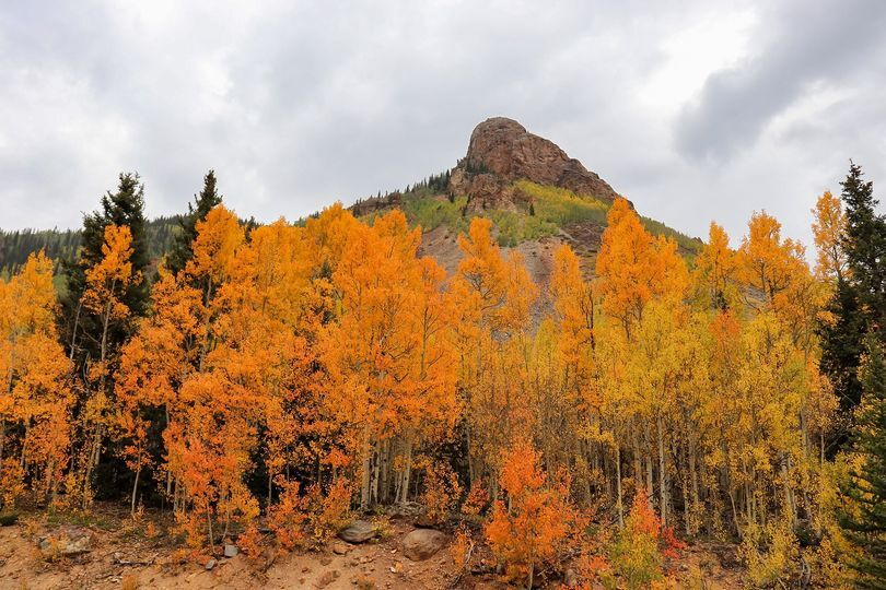 Aspens beween Ouray and Silverton_Jessica Warick