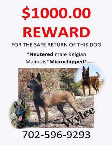 PHOTOS: Missing pets in Las Vegas area