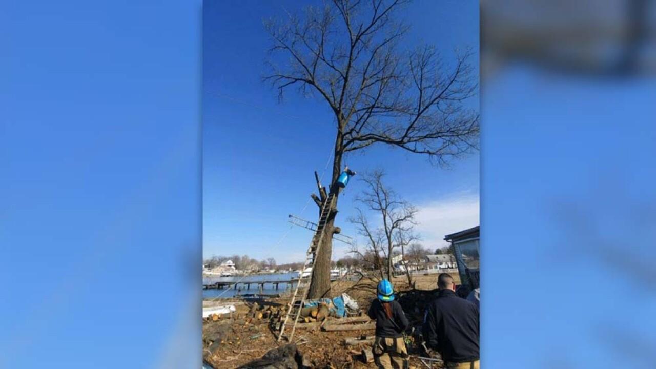 man stuck in tree 2.jpg