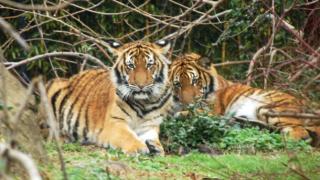 va zoo.PNG