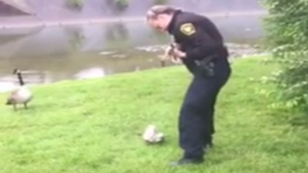 Goose finds help, leads officers to baby in need