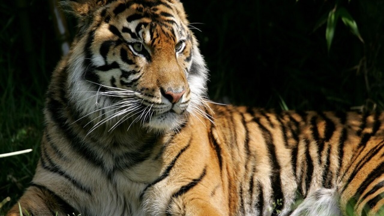Woman mauled to death by tiger at Chinese wildlife park