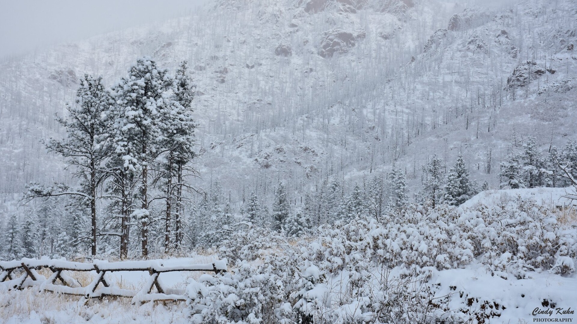 Cascade Snow Cindy Kuhn.jpg