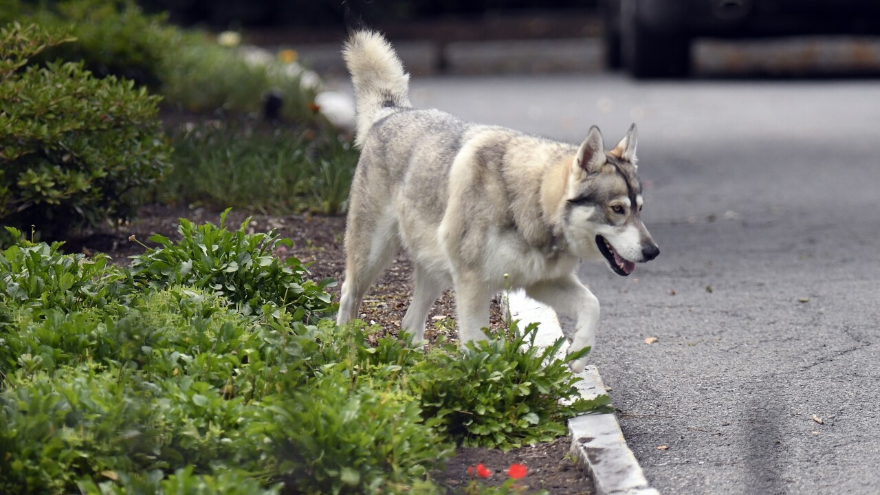 Cuomo Dog