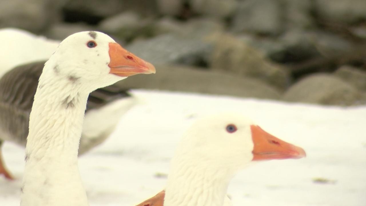Woodland Park Birds