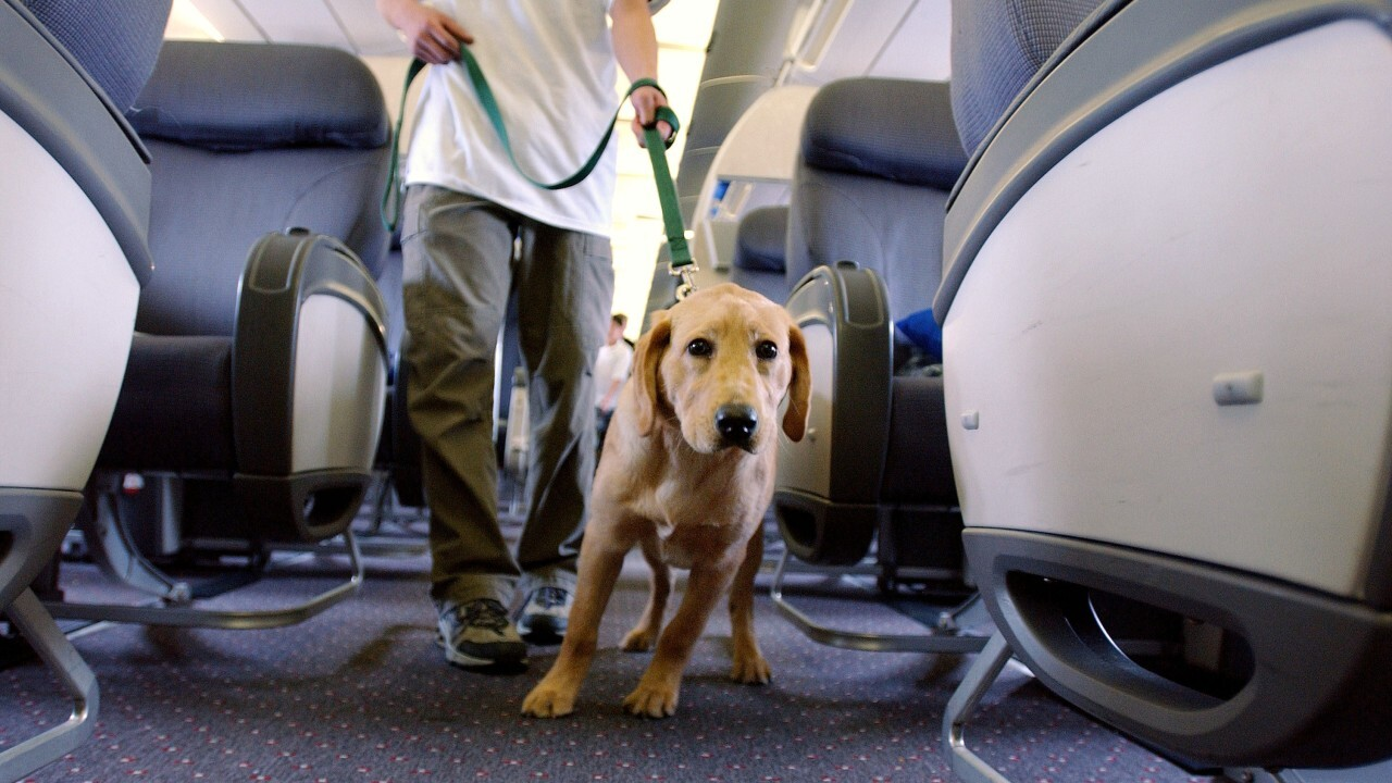U.S. airlines may no longer accept emotional support animals