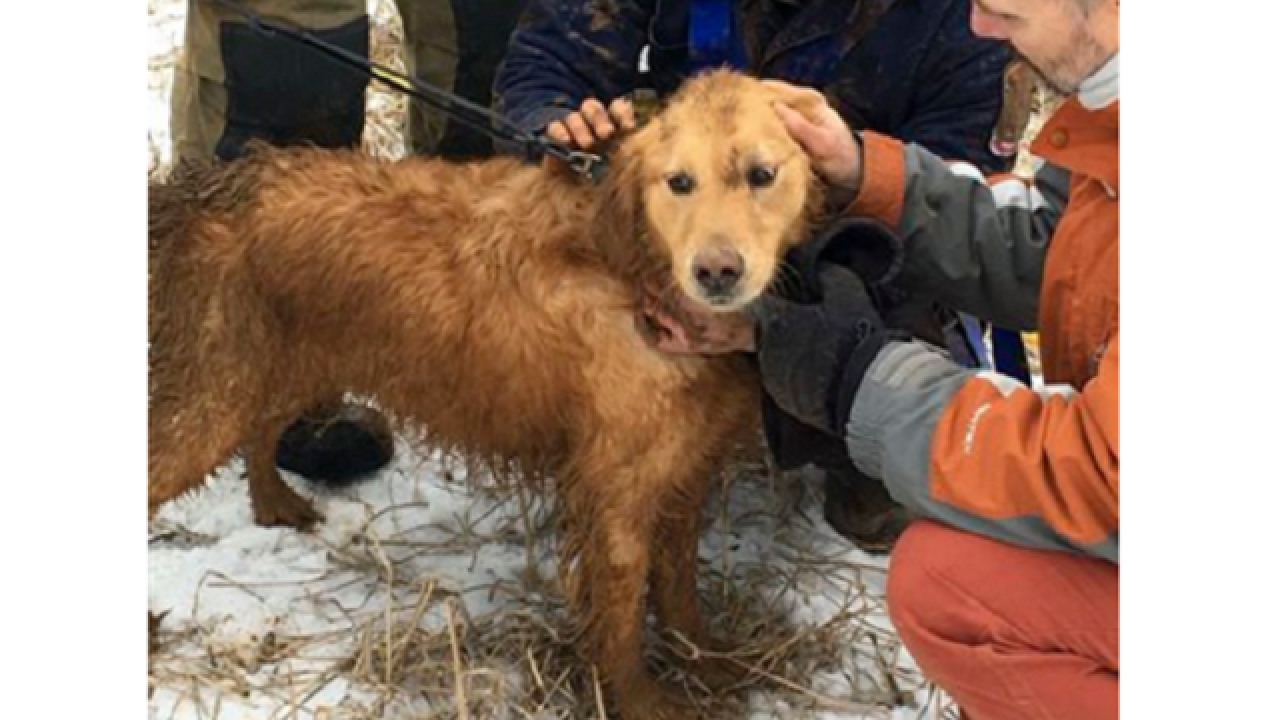 Dog rescued from large sinkhole after 2 nights