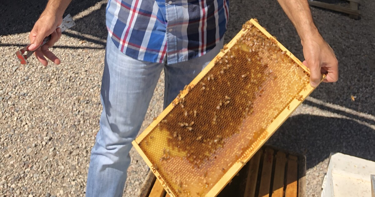 ASU hopes to fight bee crisis with beekeeping courses