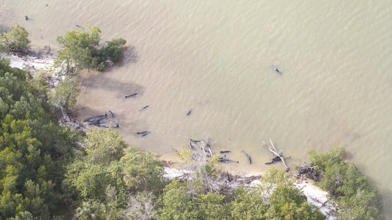 Nearly 100 dolphins dead along Florida coast