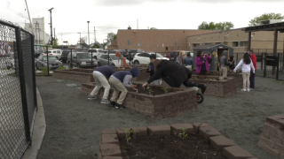 More community gardens sprouting up at schools
