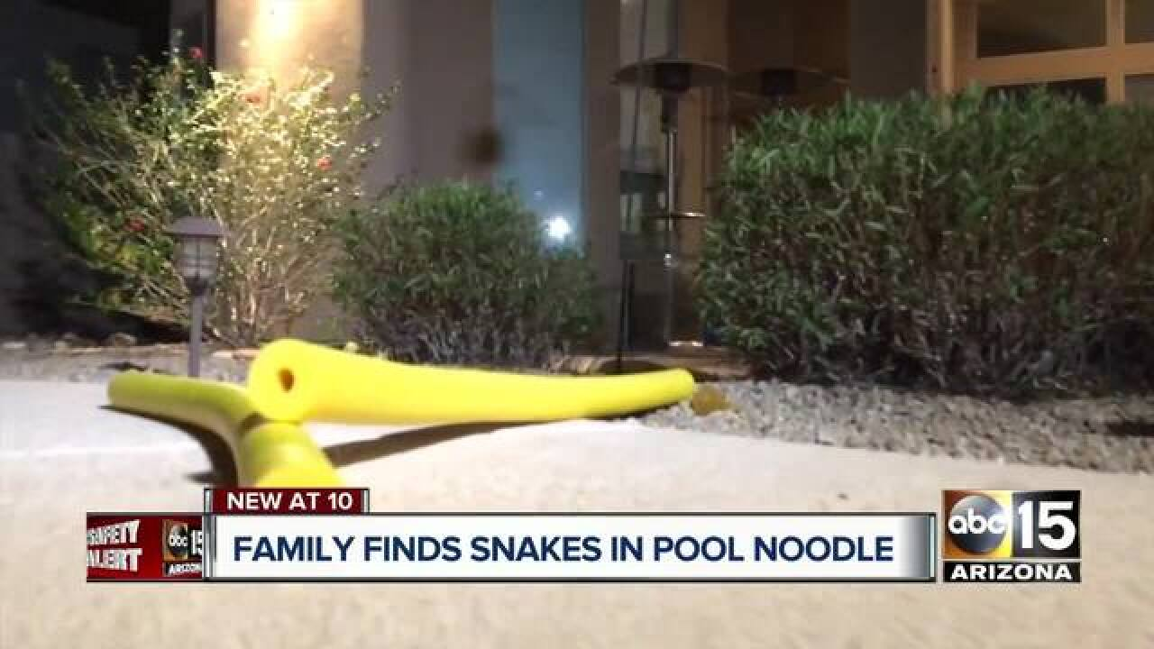 Family finds rattlesnake in pool noodle