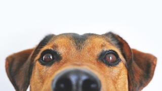 adorable-animal-blur-406014 (1).jpg
