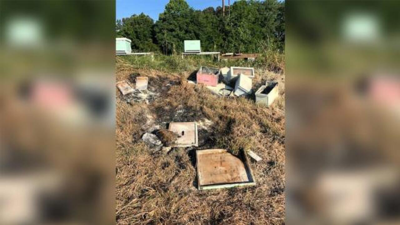 Someone burned beehives in Texas and killed more than half a million bees