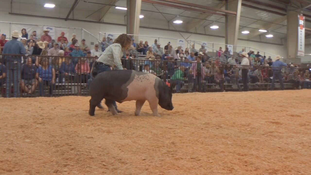 Junior Livestock show.jpg
