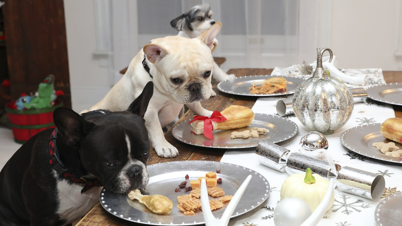 What your dog can and can't eat on Thanksgiving