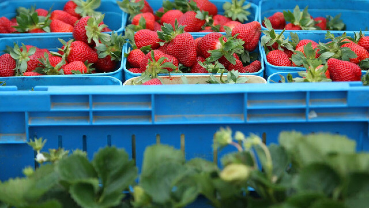 Health alert issued after strawberries contaminated with needles in Australia