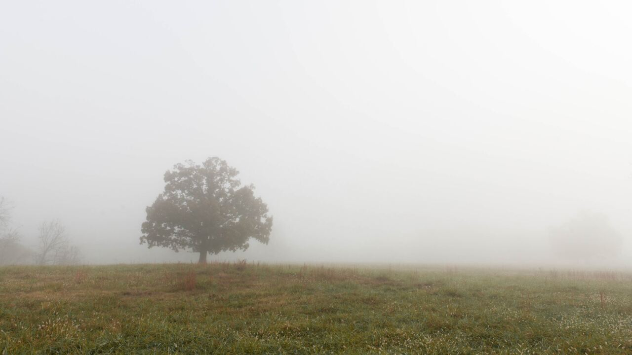 File image of foggy tree