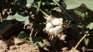 Colorado River Drought Farmers