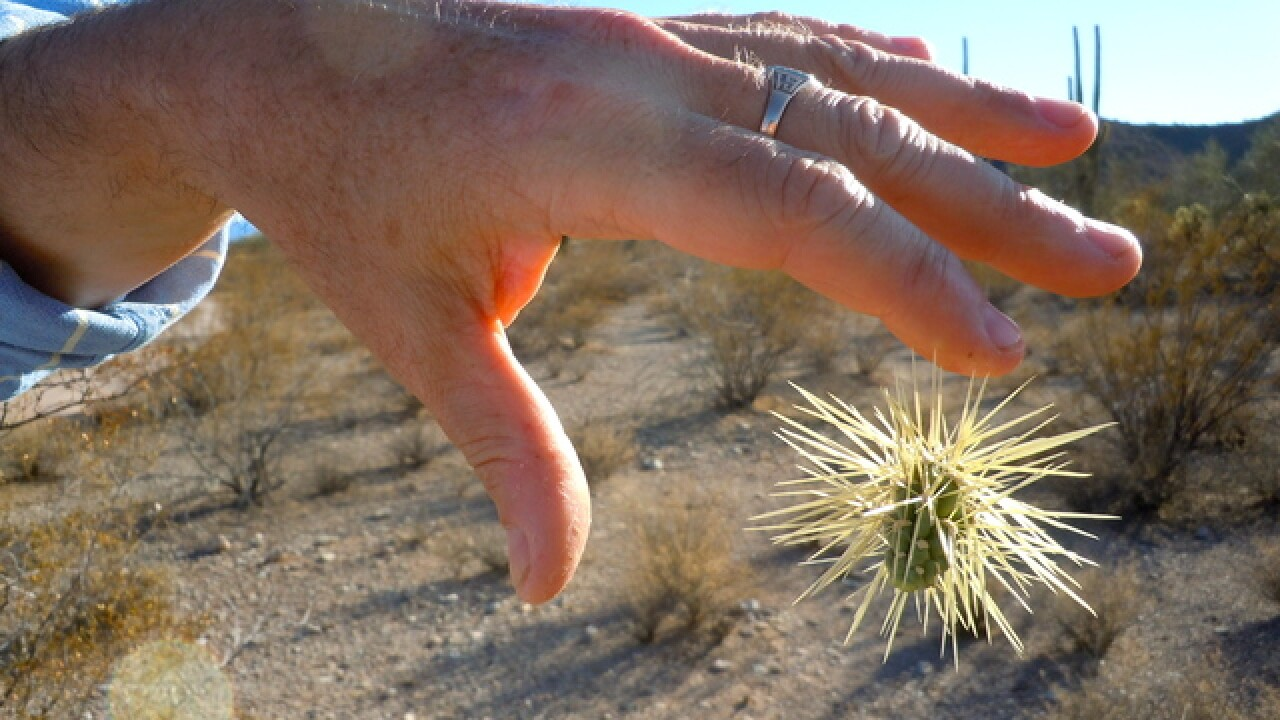 SCARY! 10 things about the 'flying' cactus
