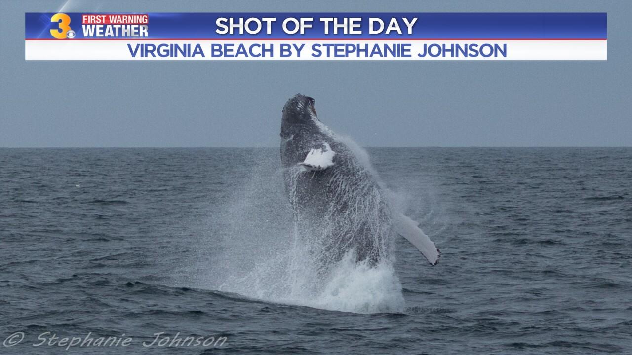 Whale Photo by: Stephanie Johnson