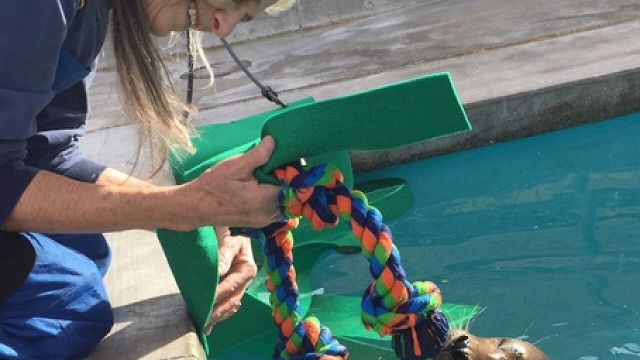 Aquarium of Niagara rescues another seal